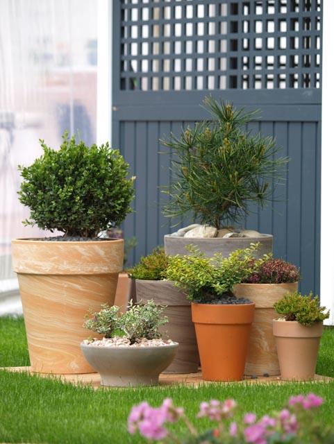Pflanze-Topf Design